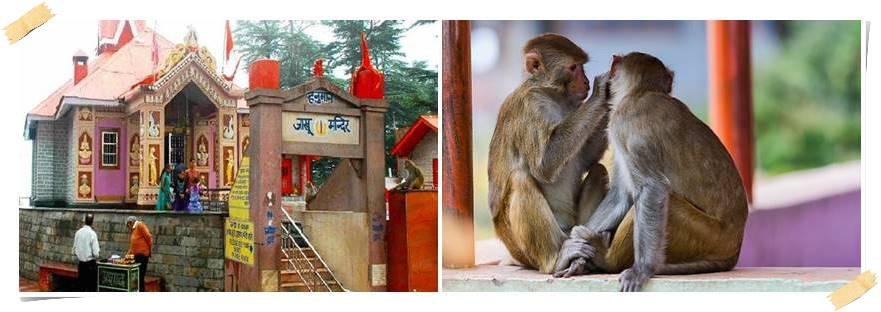 indien-aventyrsresor-shimla
