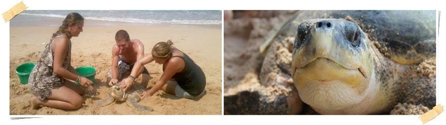 hjälp sköldpaddor som volontär Sri Lanka