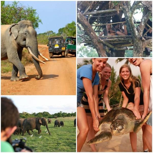 Volontär vilda elefanter sköldpaddor sri lanka
