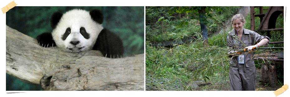 volontärresor-kina-pandor