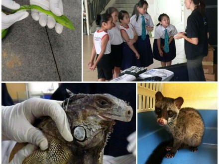 Singapore volontärer djur
