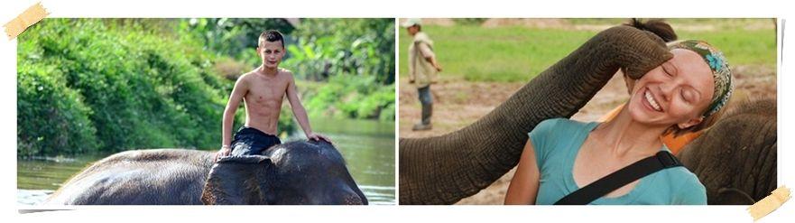 volontärer elefanter Thailand