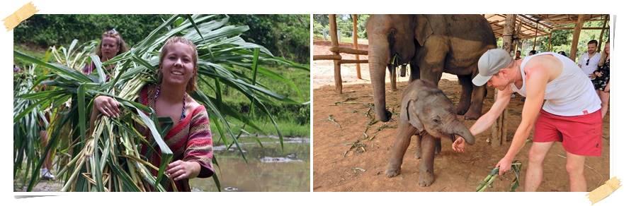 volontarresa-elefanter-thailand