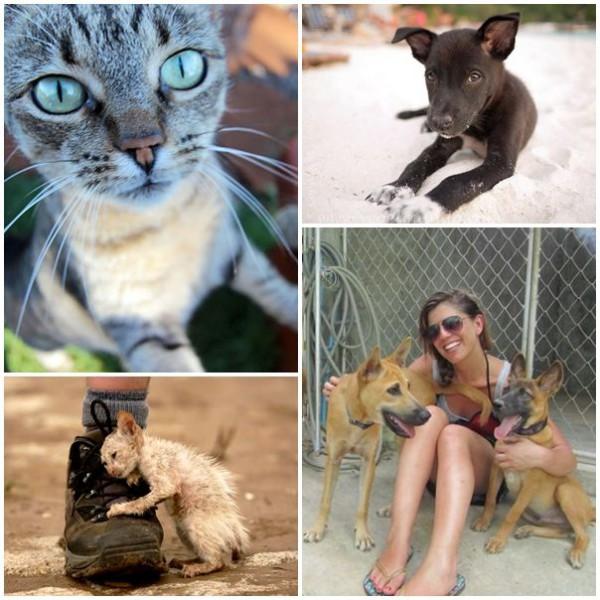 volontärarbete med hundar och katter på Koh Samui Thailand