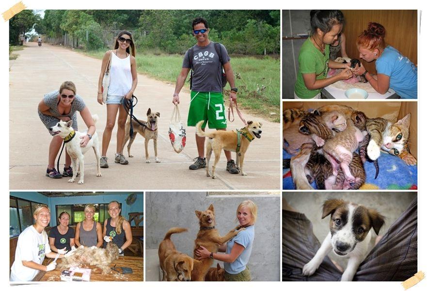 volontärer med hundar och katter i thailand på Koh Samui