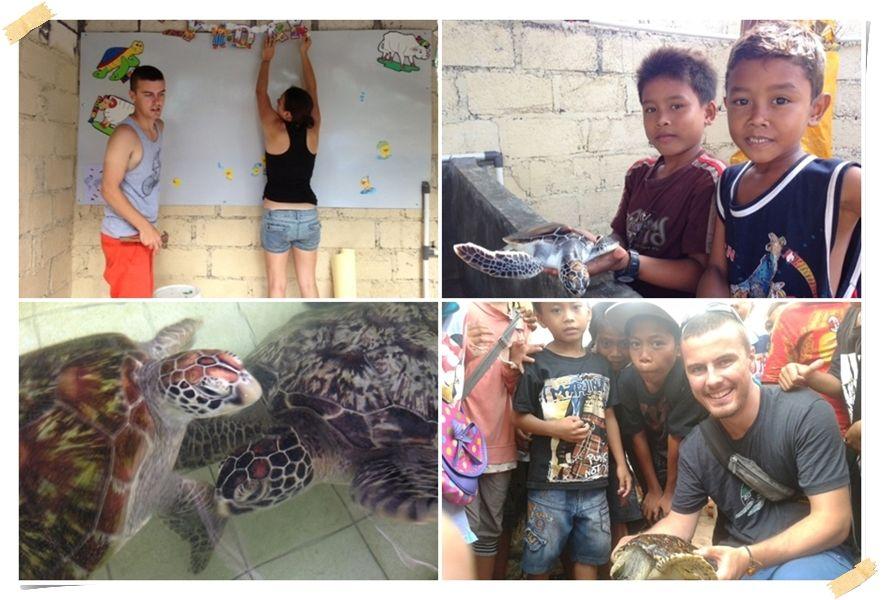 volontärer hjälper sköldpaddor på Bali