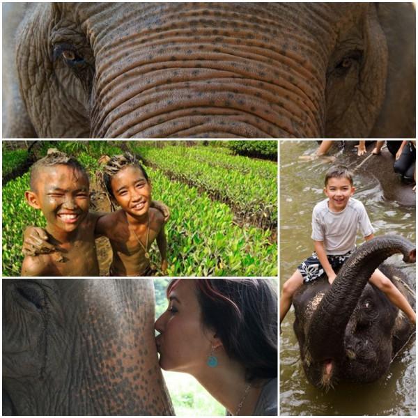 Volontärarbete med elefanter i Surin Thailand