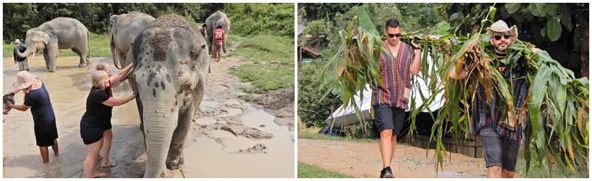 volontararbeta-med-elefanter-thailand