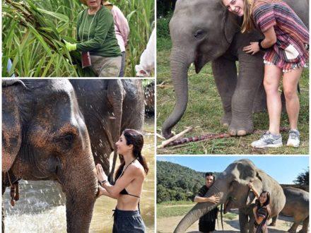 volontararbete-elefanter-thailand