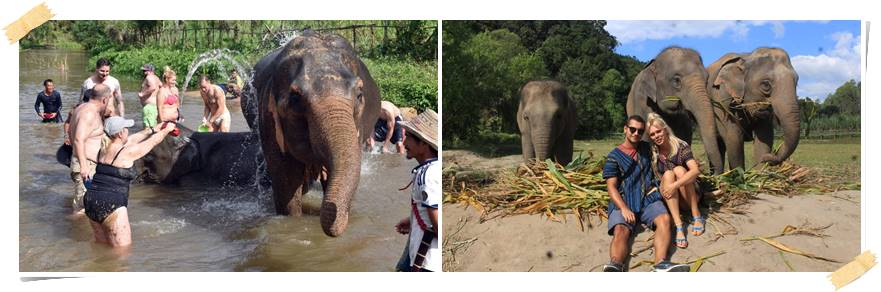volontarresor-elefanter-thailand