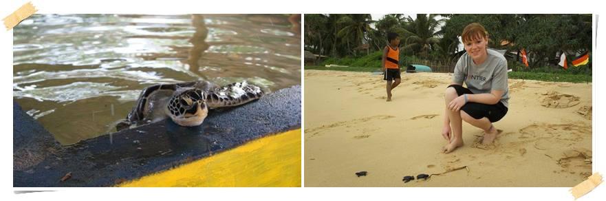 äventyrsresa-srilanka-sköldpaddor-volontär