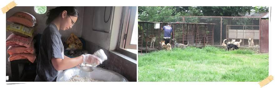 frivillig-arbeid-hunder-dyr-nepal
