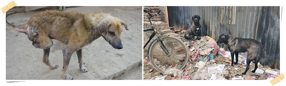 volontär-hundar-nepal