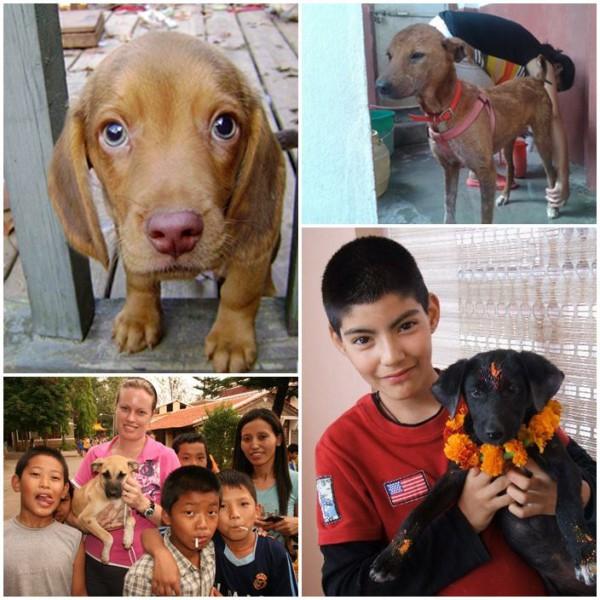 volontärresa-hundar-nepal