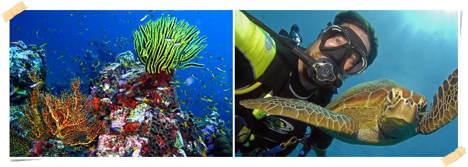 volontär-dykning-marint-bevarande-kambodja