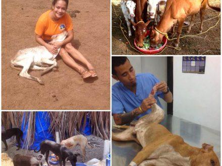 frivillig-arbeid-dyr-india-goa