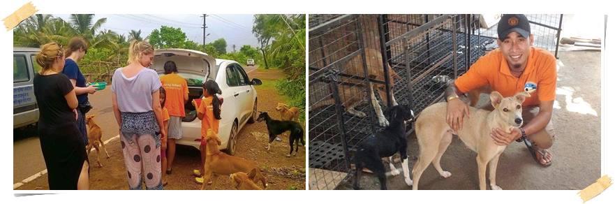 frivillig-arbeid-med-dyr-goa-india