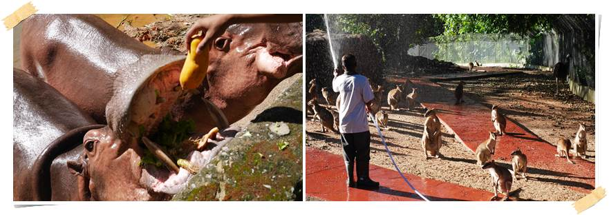 frivillig-arbied-zoo-dyrepark