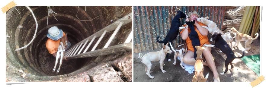 volontärarbete-hundar-utomlands-indien