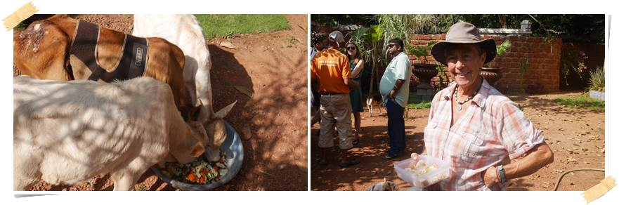 volontärarbete-med-djur-goa-indien