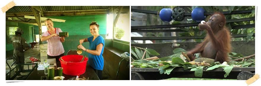 volontärarbete-orangutang-malaysia