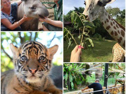 voloontärresor-zoo-djurpark-malaysia