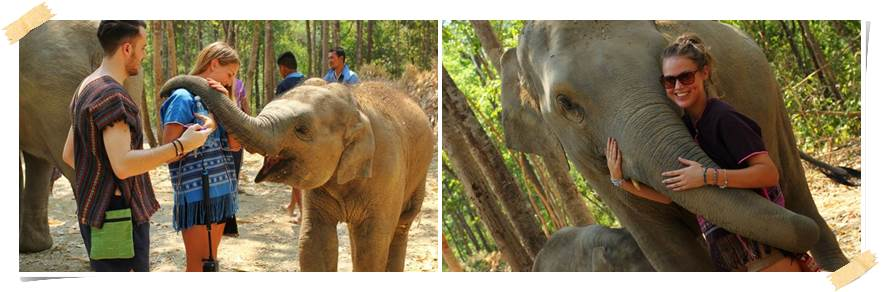 elefanter-volontär-thailand