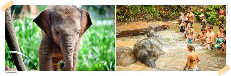 frivillig-arbeid-elefanter-thailand