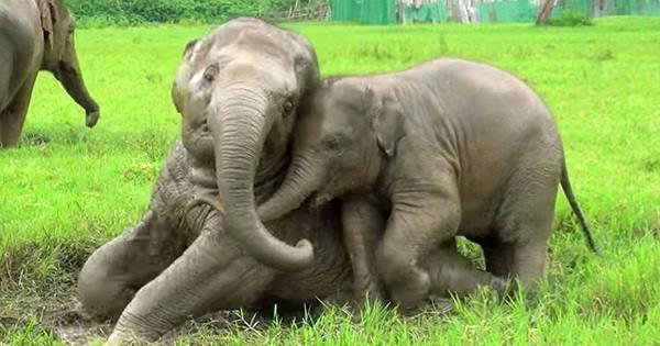 volontar-elefanter