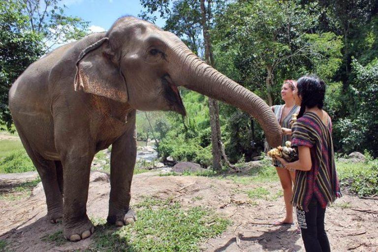 volontära-med-elefanter-i-thailand