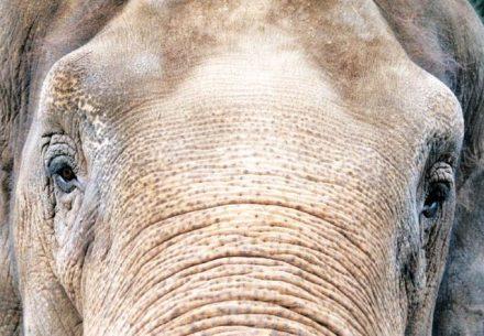 elefant-volontärarbete