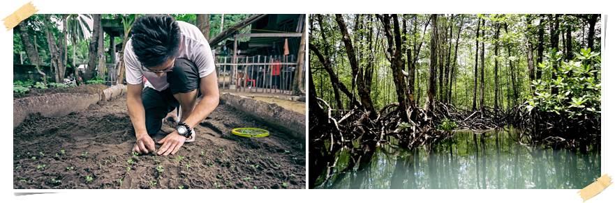 mangroveträd-volontär-filippinerna