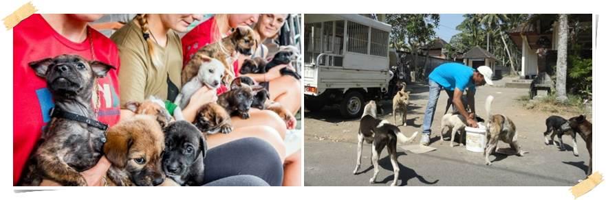 volontärarbeta-med-hundar-bali