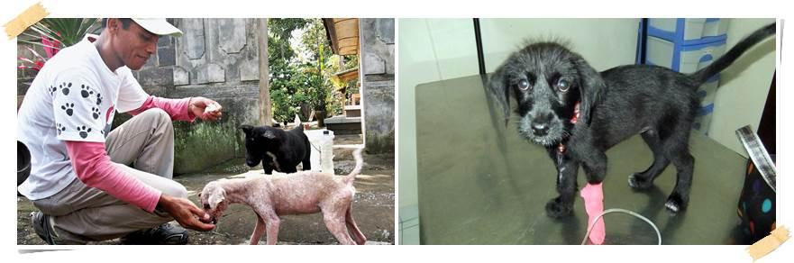 volontärresor-hundar-bali
