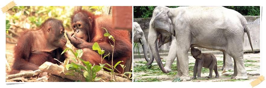 volontaerresor-djur-malaysia