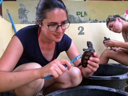 volontarresor-bali-skoldpaddor