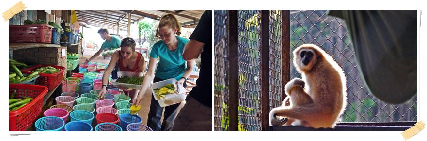 frivillig-arbeid-dyr-thailand