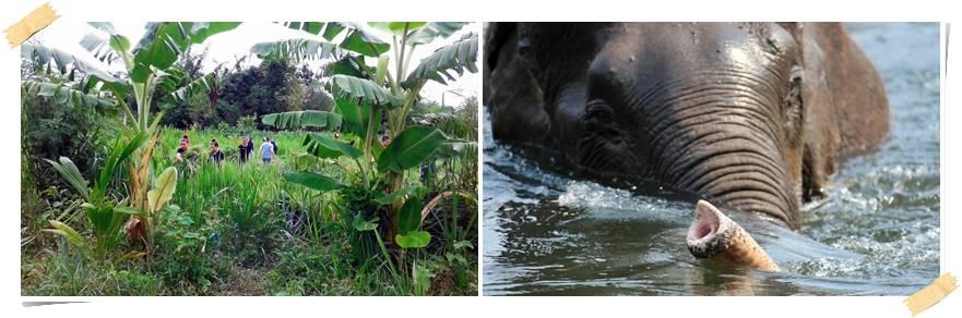 frivillig-arbeid-thailand-elefanter