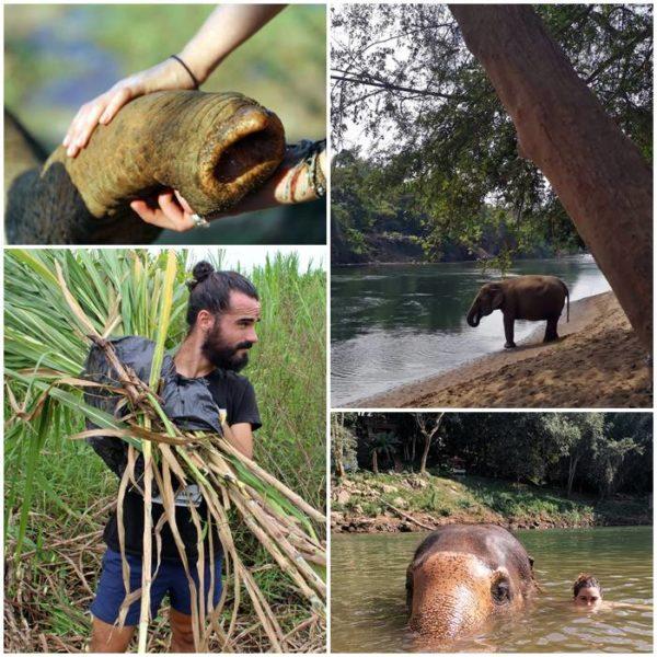 volonararbete-elefanter-thailand