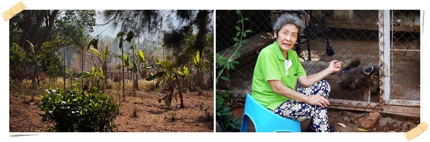 volontararbete-apor-gibbon-thailand