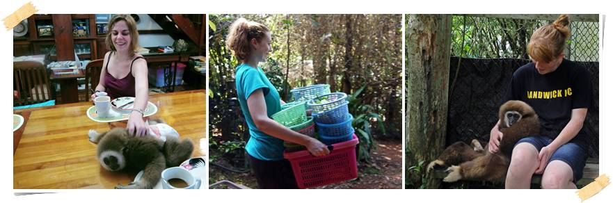 volontararbete-djur-thailand