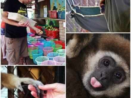 volontarresor-apor-gibbon-thailand