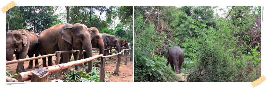 volontarresor-elefanter-thailand-kanchanaburi